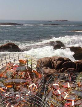 Wholesale Seafood Products | A C  Inc - Quality Maine Seafood