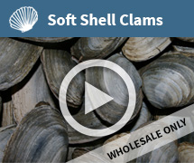 Soft Shell Clams